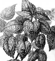 Реалистичное изображение растений в графике