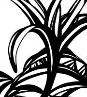Растения в графике
