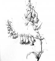 Растения в графике. Фото-1