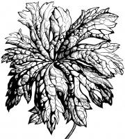 Растения в графике. Фото-4