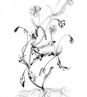 Растения в графике. Фото-5