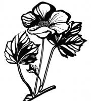 Растения в графике. Фото-9