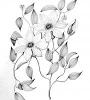 Растения в графике. Фото-8