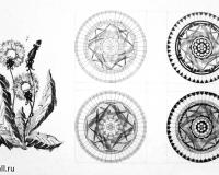 Стилизация растительных форм-3