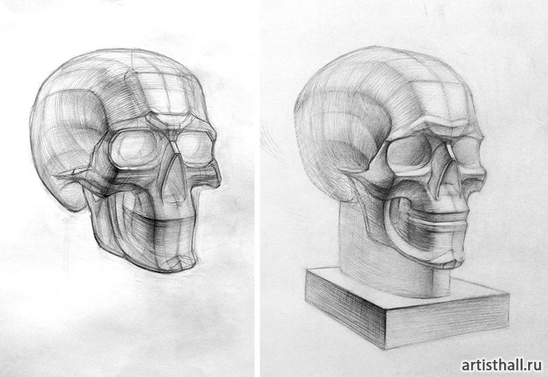 Рисование анатомической модели черепа