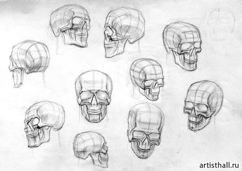 Рисования черепа в разных положениях
