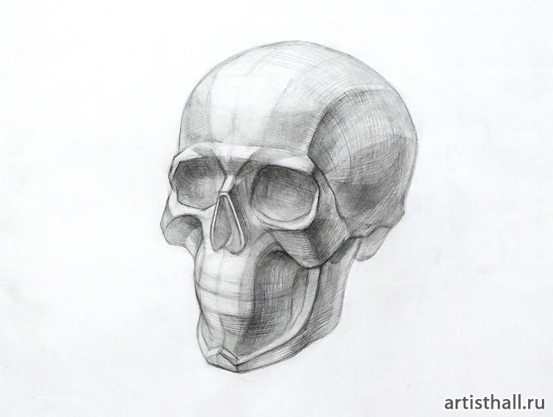 Рисунок черепа на занятиях по рисунку