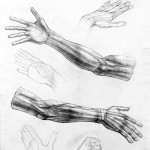 Рисование частей человеческого тела
