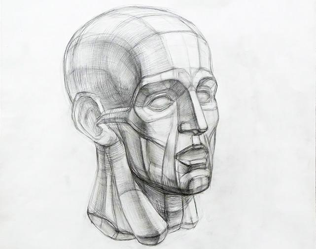 Рисунок головы Экорше