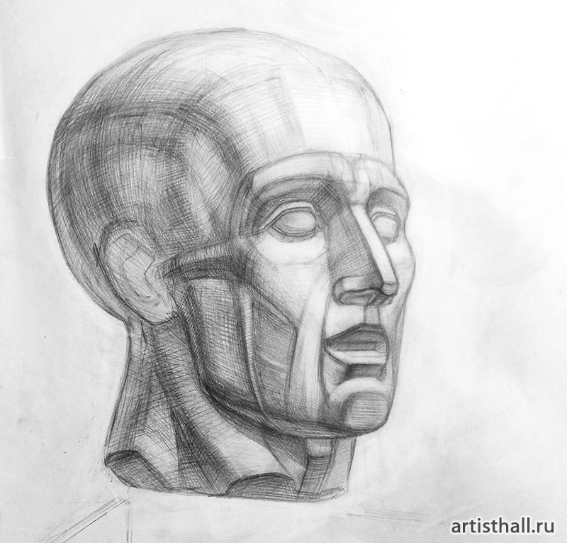 Голова Экорше рисунок