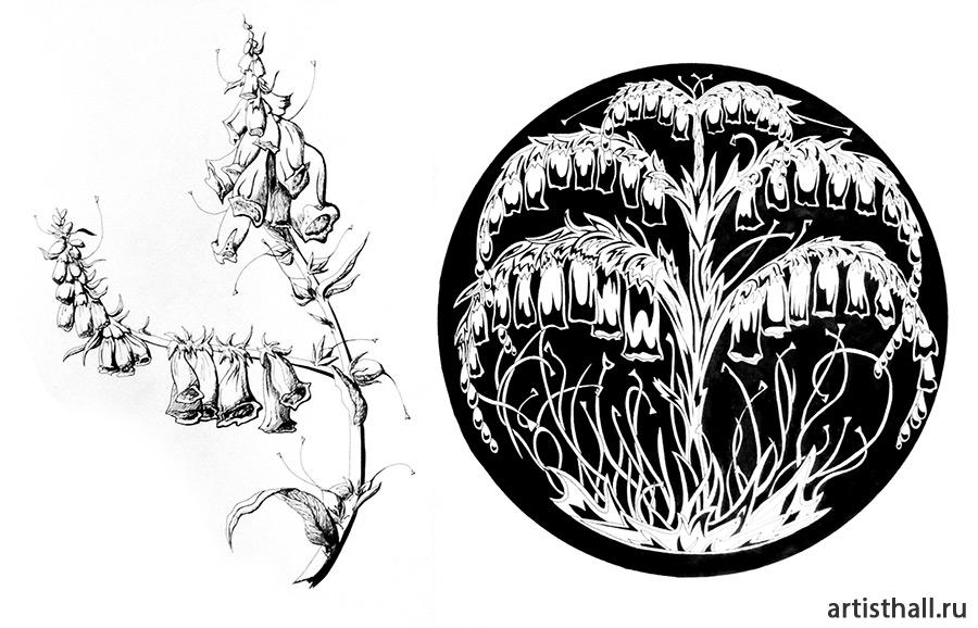 Рисунок растения с натуры и его стилизация