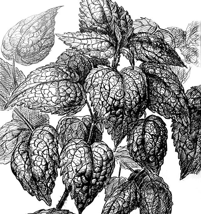 Рисование растений в графике