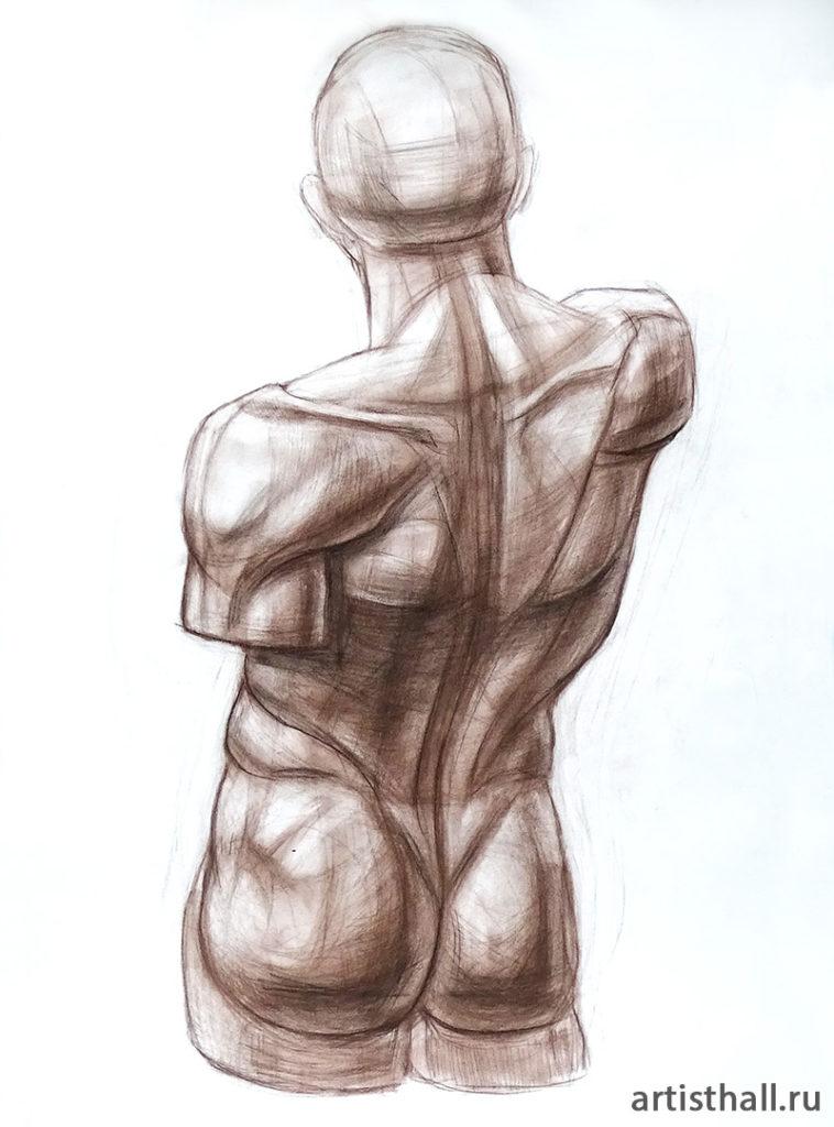 Рисунок торса Экорше со спины