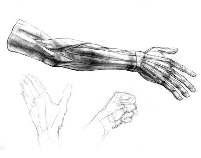 Рисование анатомической руки