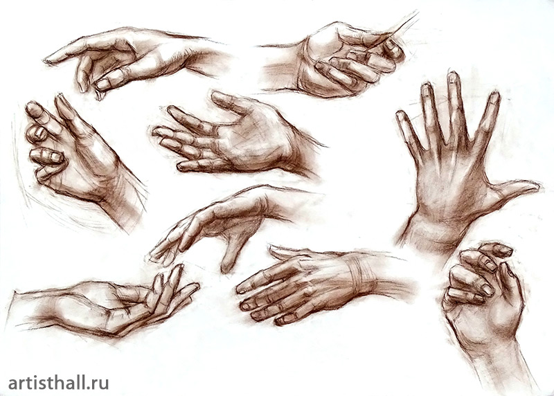 Рисование кистей с натуры