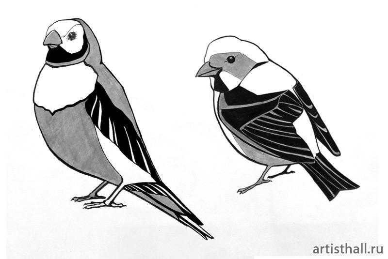 Задание Птицы - графический вариант-1