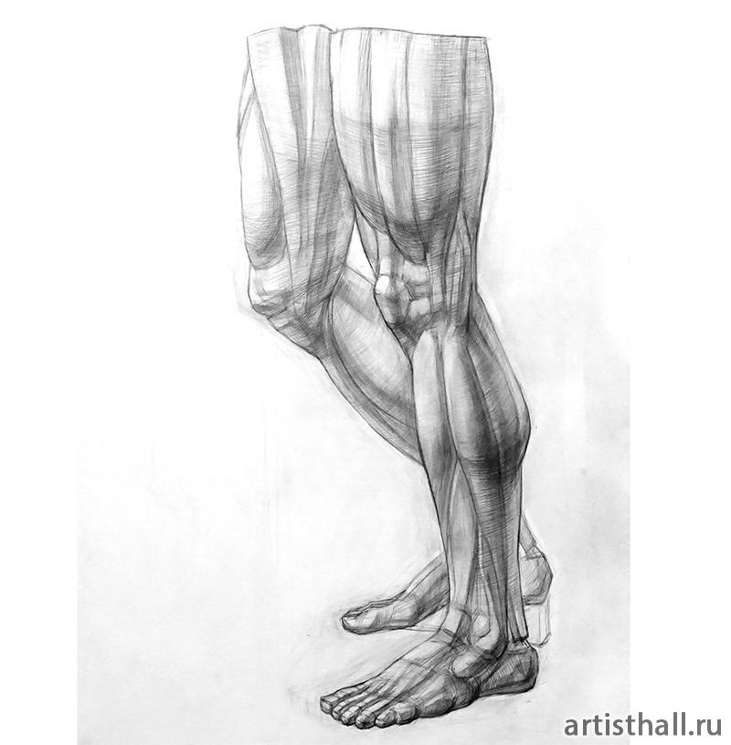 Рисование анатомической ноги