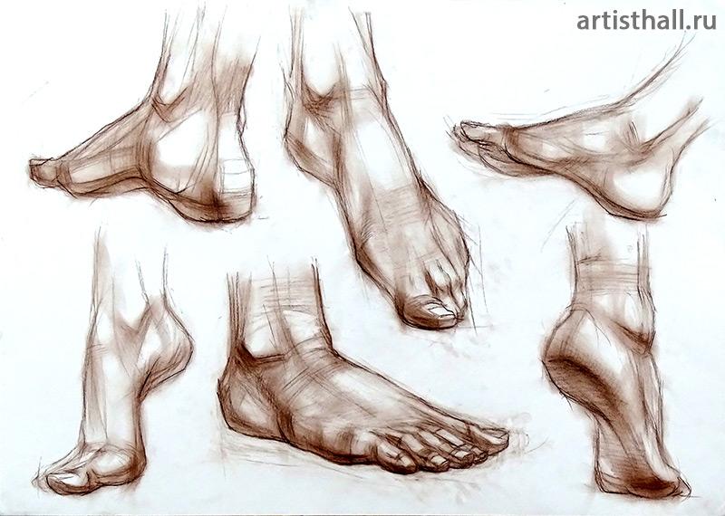 Рисунок стопы