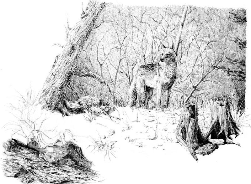 Графические работы Майи Половицкой-3