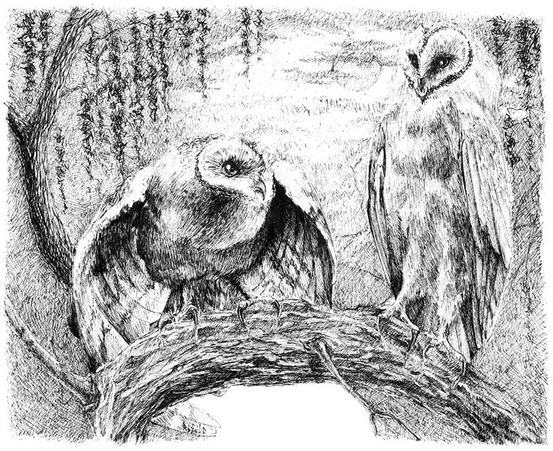 Графические работы Майи Половицкой-5